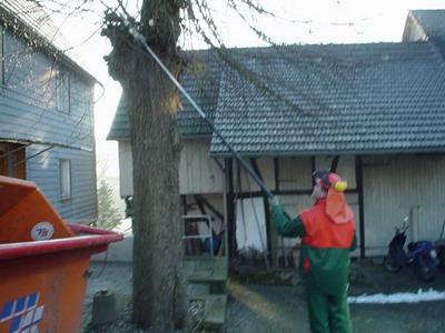 Obstbaumschnitt Kronenschnitt Schneid- und Fällarbeiten in Reichshof Nümbrecht Waldbröl